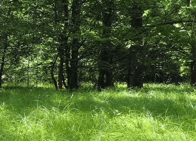 forest and grassy field