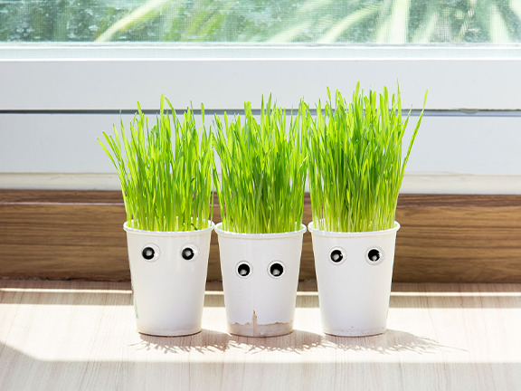 Three plants with googly eyes